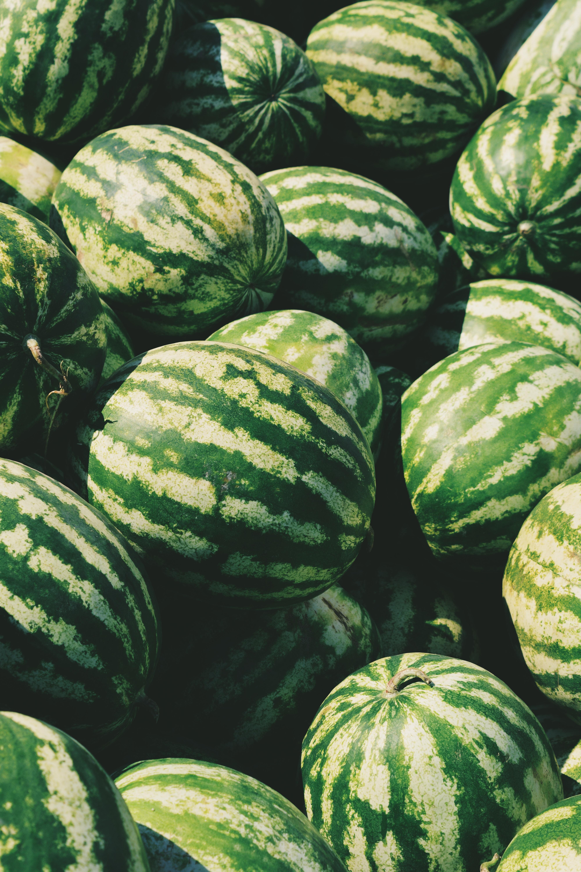 Wassermelone Pflanzen Kaufen : rote wassermelone citrullus lanatus gartencenter zulauf pflanzen kaufen ~ Watch28wear.com Haus und Dekorationen
