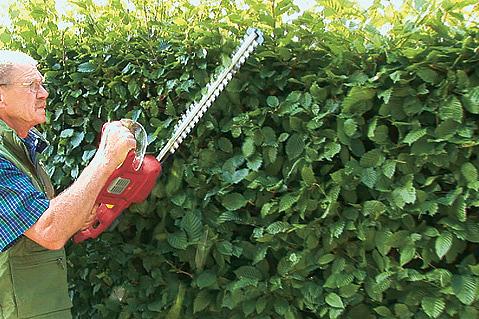 Hervorragend Hainbuchenhecke schneiden - Gartencenter Zulauf - Pflanzen kaufen OF28