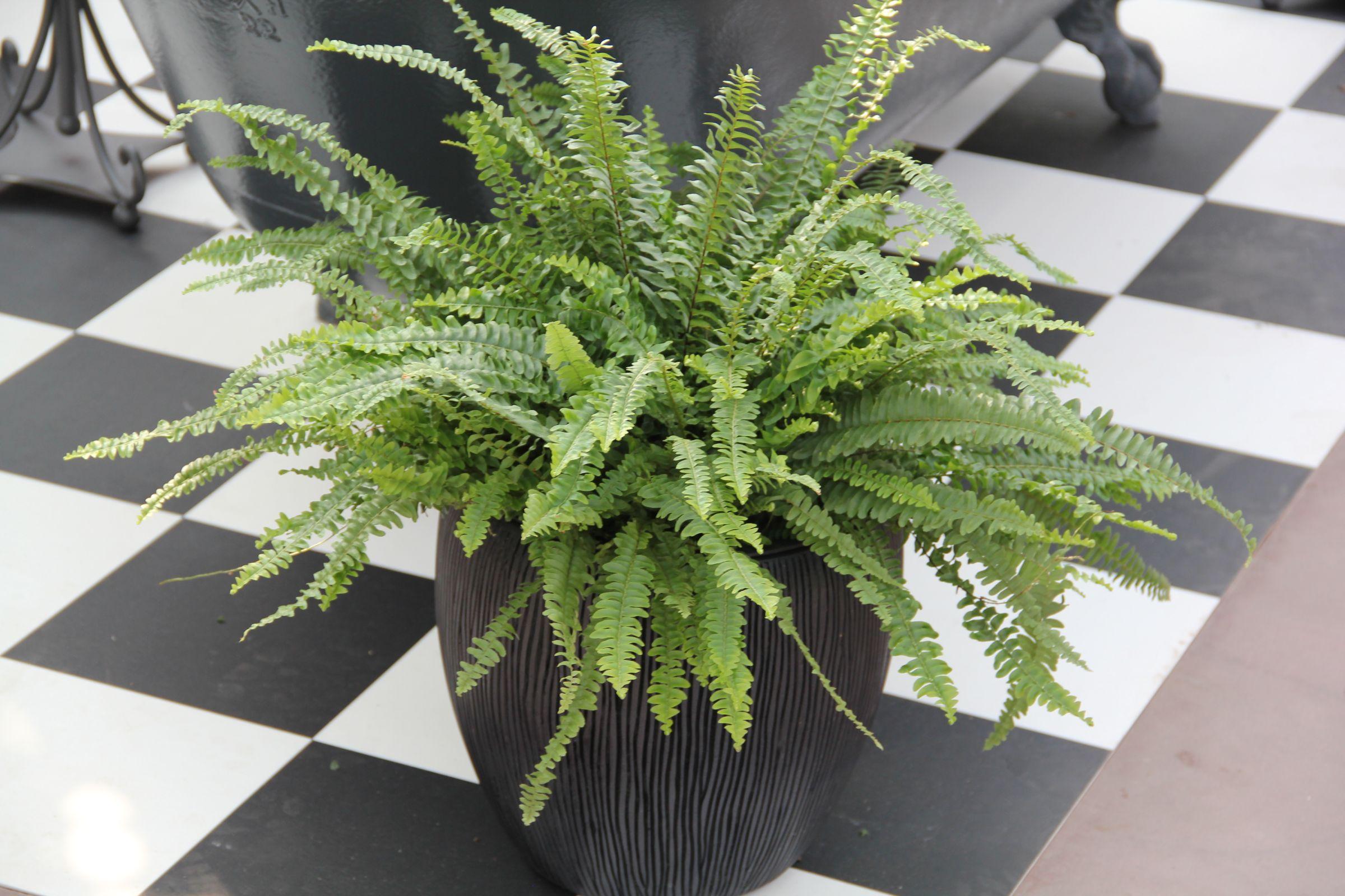 Zimmerpflanzen für schattige Standorte - Gartencenter Zulauf ...