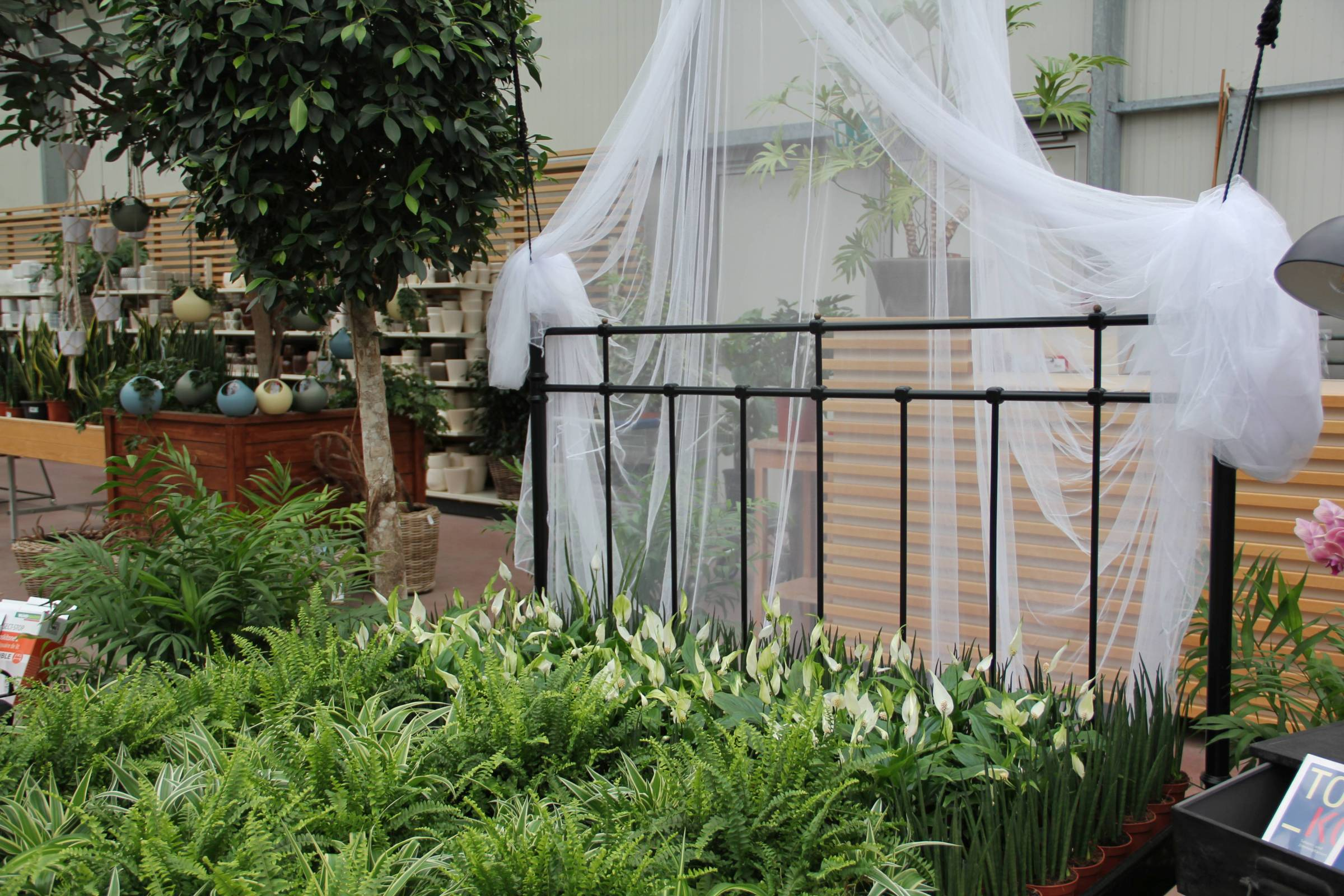 Pflanzen für das Schlafzimmer - Gartencenter Zulauf - Pflanzen kaufen